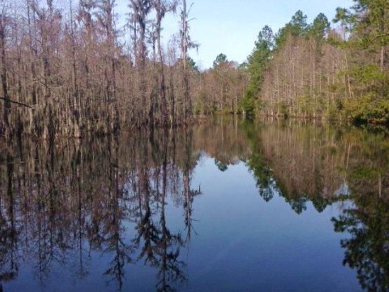 Gorgeous Cypress Pond On 25 Acres : Jesup : Wayne County : Georgia