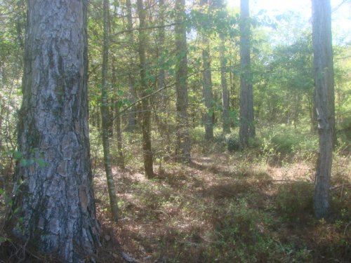 42 Acre Hunting & Homesite : Vienna : Dooly County : Georgia