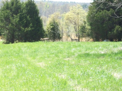 Huge Price Reduction 110 +/- Acres : Lafe : Greene County : Arkansas