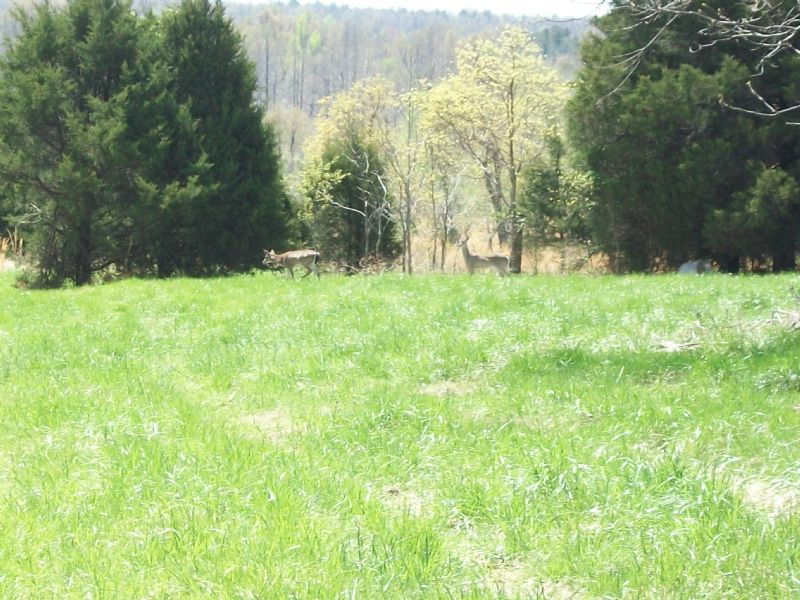 Huge Price Reduction 110 +/- Acres : Lafe : Greene County : Arkansas