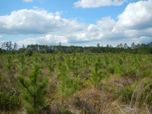 187 Acres On Jamestown Road : Waycross : Ware County : Georgia