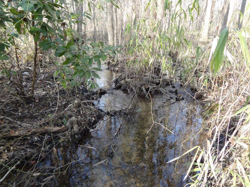 45 Acres Marlboro County : Wallace : Marlboro County : South Carolina
