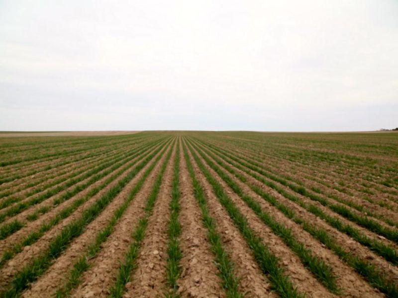 Meinzer Farms Land Auction : Flagler : Kit Carson County : Colorado