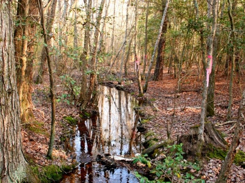 41.41 Acres On Mt Olive Cohoke Rd : King William : King William County : Virginia