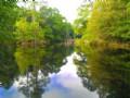 Canoochee Pines Retreat