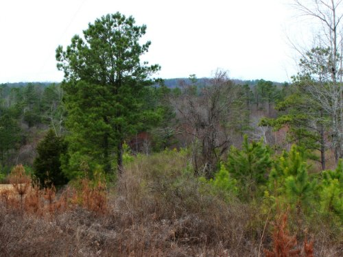 Talking Rock: Recreational Land : Talking Rock : Pickens County : Georgia