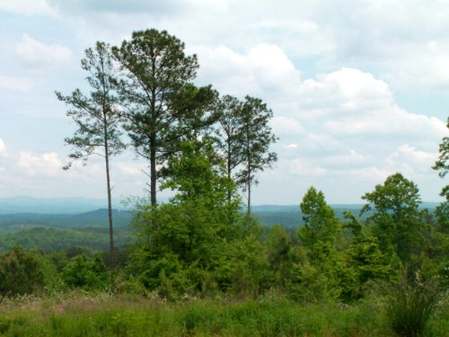 Talking Rock: Hunting & Recreation : Talking Rock : Pickens County : Georgia