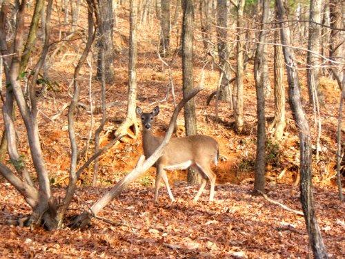 Talking Rock: Hunting Land : Talking Rock : Pickens County : Georgia