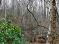 Talking Rock: Wooded Hunting Land
