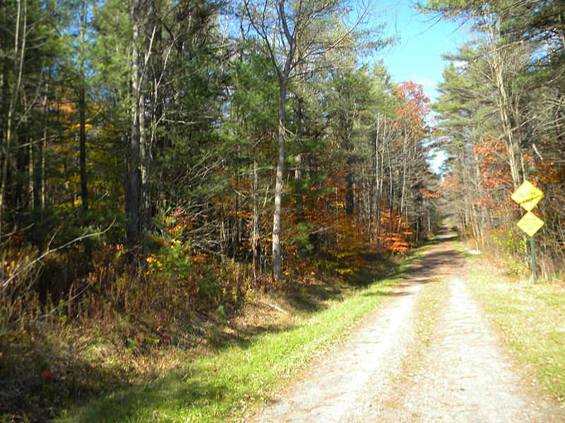 5+ Acres In The Finger Lakes : Danby : Tompkins County : New York