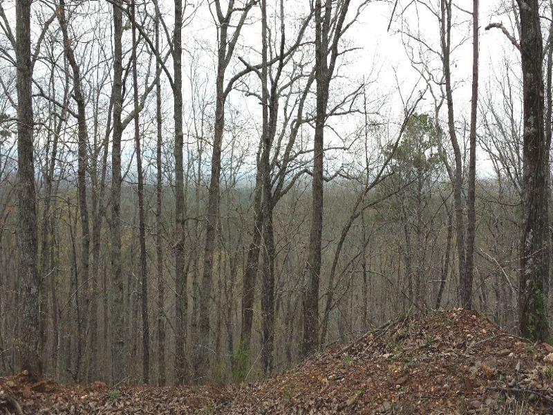Oak Mountain Tract : Wedowee : Randolph County : Alabama