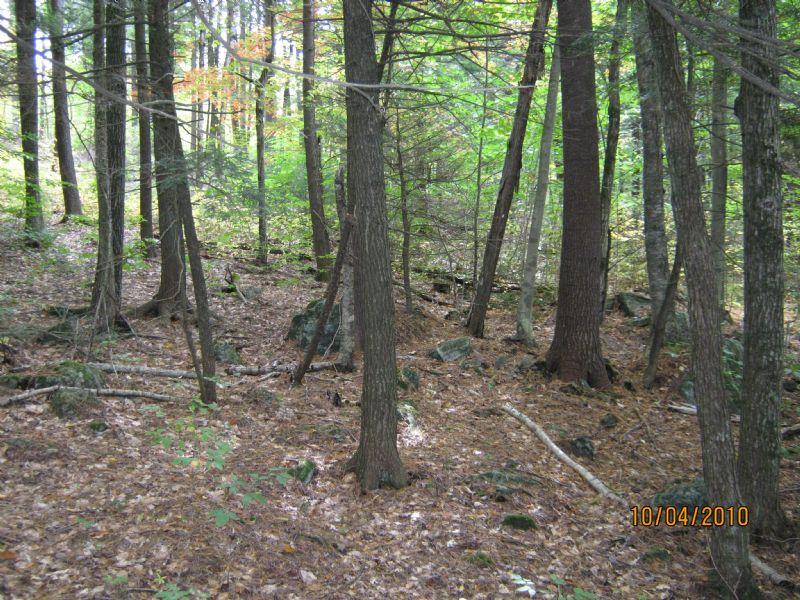 Turner Woodlot - 213 Acres : Turner : Androscoggin County : Maine