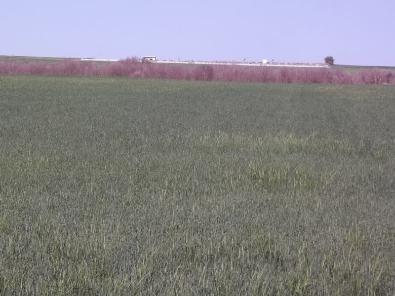 154 Acres Crop • Pasture • Hunting : Nash : Grant County : Oklahoma