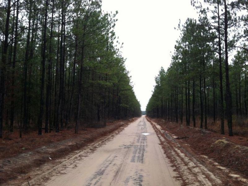 Sylvania West Tract : Swainsboro : Emanuel County : Georgia