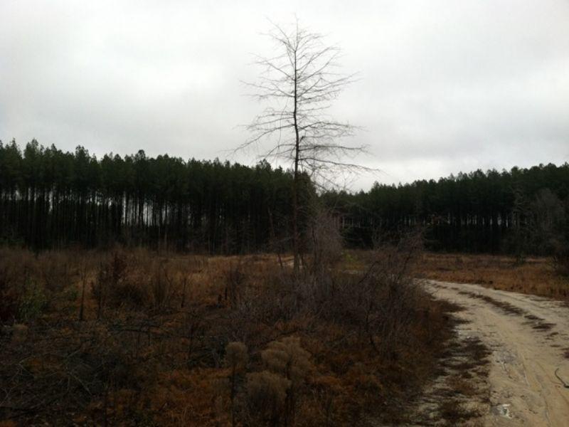 Sylvania East Tract : Swainsboro : Emanuel County : Georgia