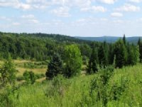 26 Acres Near State Forest Hunting