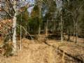 58 Acres Of Woods & Open Ground