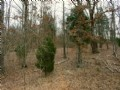 140 Acres Hunting And Open Ground
