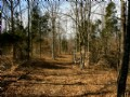 82 Acres Hunting And Open Ground