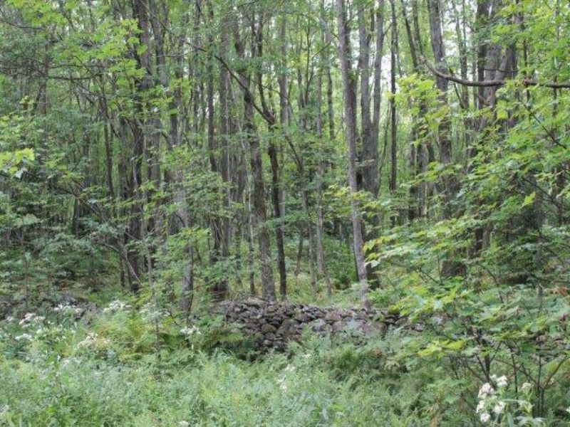 51+ Acres Near State Land : Montague : Lewis County : New York
