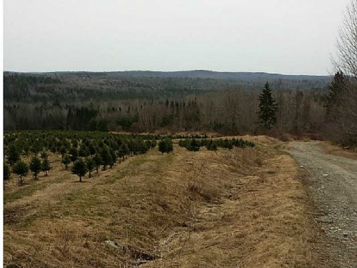 Mountain View 1187 Acre Parcel : Plymouth : Washington County : Maine