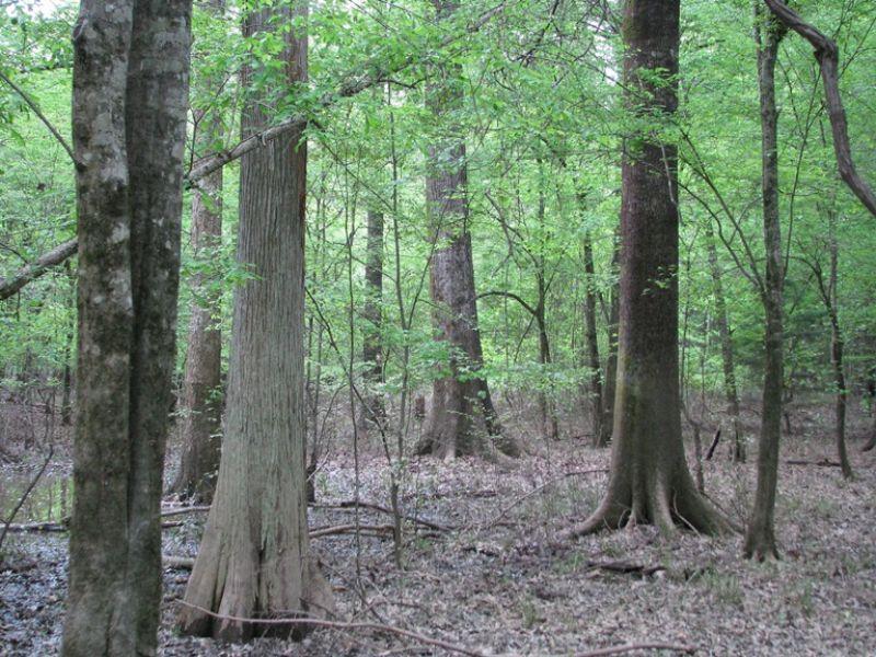 Morvin 540 : Morvin : Clarke County : Alabama