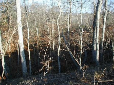 32.5 Acre Homesite And Hunting : Moundville : Hale County : Alabama