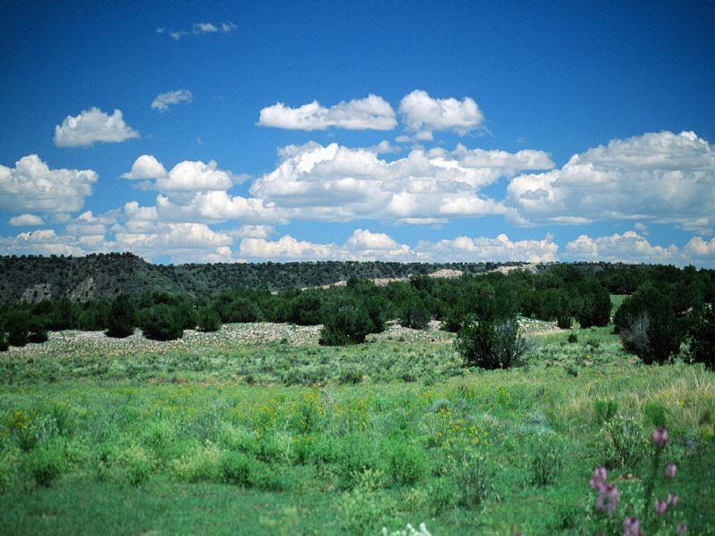 River Valley Ranch : Snowflake : Apache County : Arizona