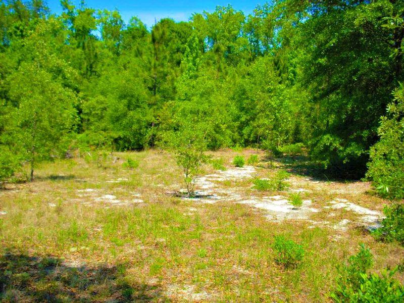 Cedar Grove Tract A : Alamo : Laurens County : Georgia
