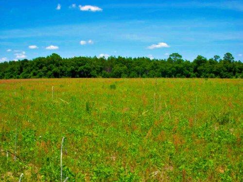 Cedar Grove Tract B : Dublin : Laurens County : Georgia