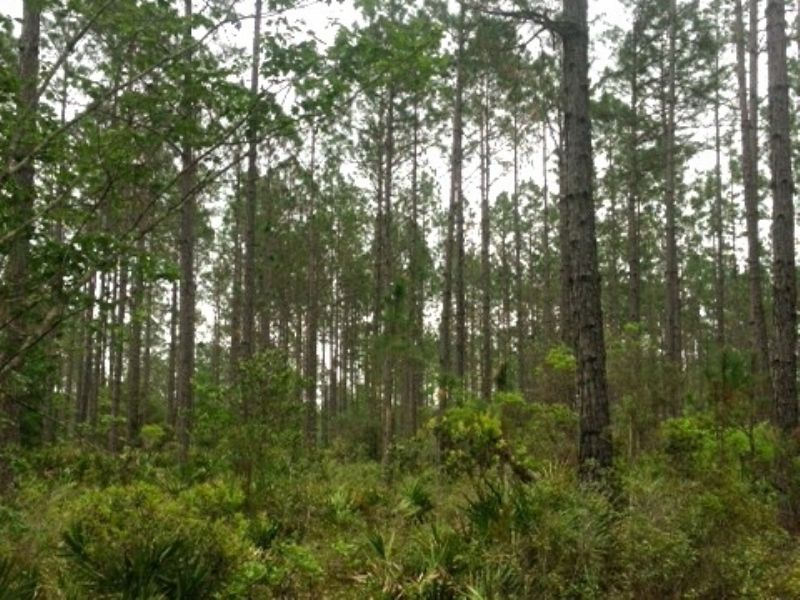 Great  Hunting Tract : Waycross : Ware County : Georgia