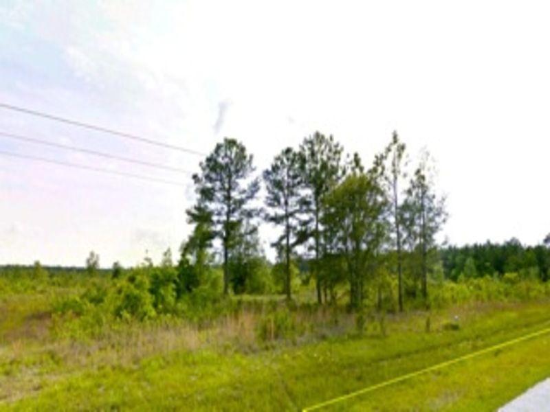 45 Acres, Quality High & Dry Land : Jesup : Wayne County : Georgia
