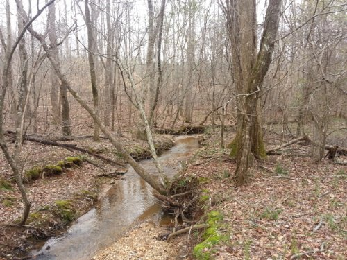 43 +/- Acres Near Roanoke : Roanoke : Randolph County : Alabama