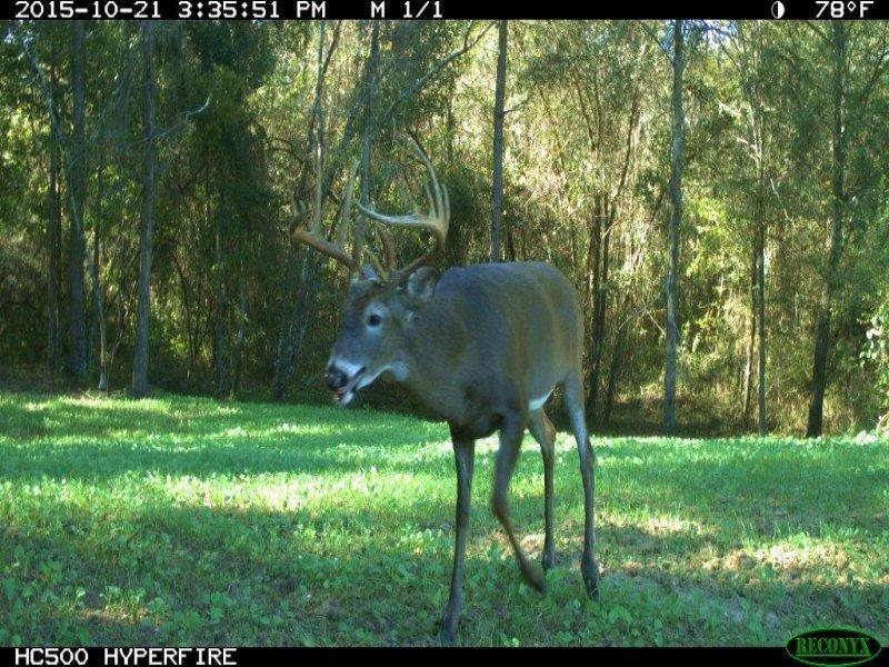 38 Acre Big Buck Tract : Unadilla : Dooly County : Georgia