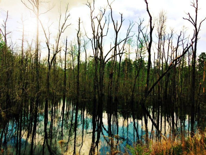 Horse Creek : Sylvania : Screven County : Georgia