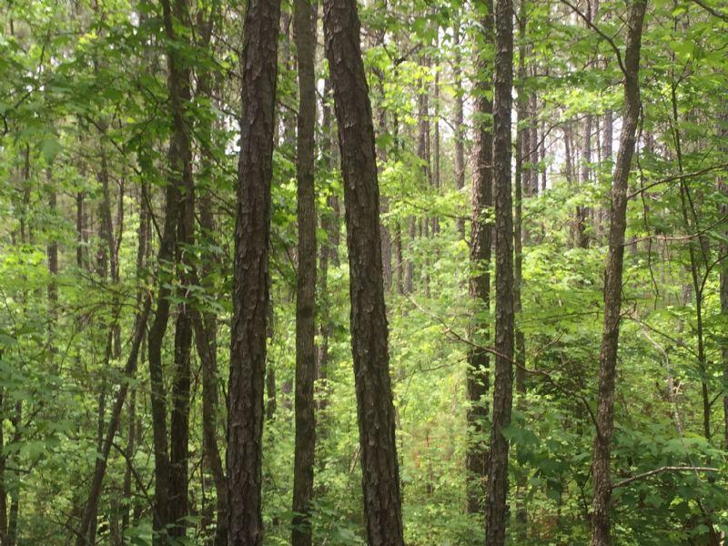 Country Retreat : Monticello : Jasper County : Georgia