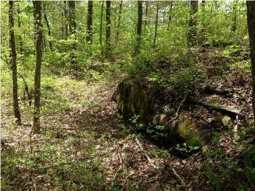 50+/- Recreational Property : Whitwell : Marion County : Tennessee