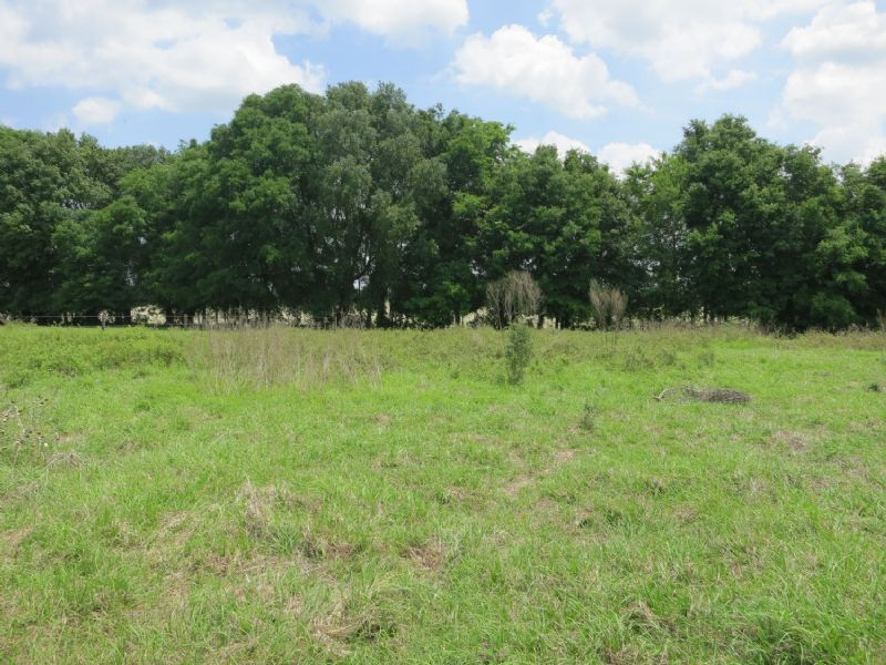 Reduced 35.32ac - Pasture & Meadow : Newberry : Alachua County : Florida