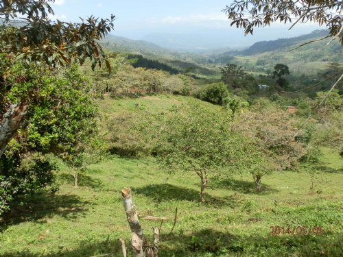 5 Ac. Choice Miniranch-spring Water : La Suiza De Turrialba : Costa Rica