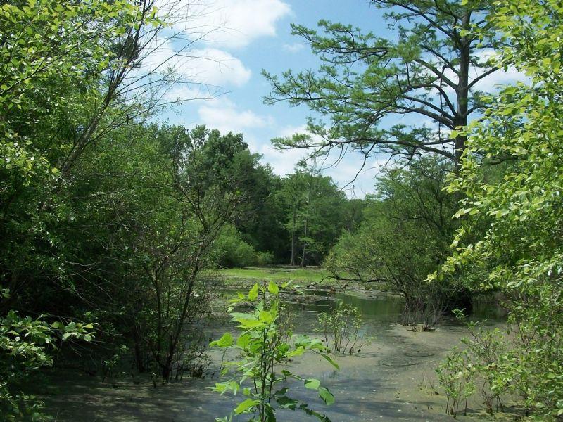 96.1 +/- Acres Duck & Deer Hunting : Altheimer : Jefferson County : Arkansas