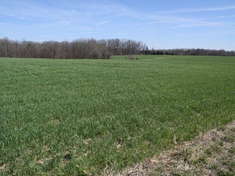 Multi-tract - 130+/- Acre Farm : Staley : Chatham County : North Carolina