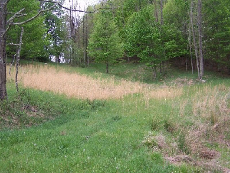 19 Acre Homesite Perfect Mini-farm : Elk Creek : Grayson County : Virginia