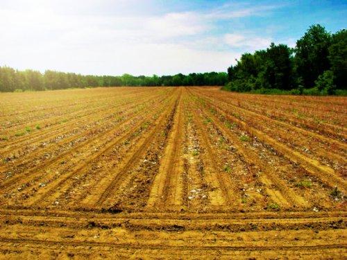 Seven Silos Farm : Statesboro : Bulloch County : Georgia