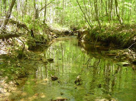 267 Acres At A Great Price : Tuscaloosa : Tuscaloosa County : Alabama