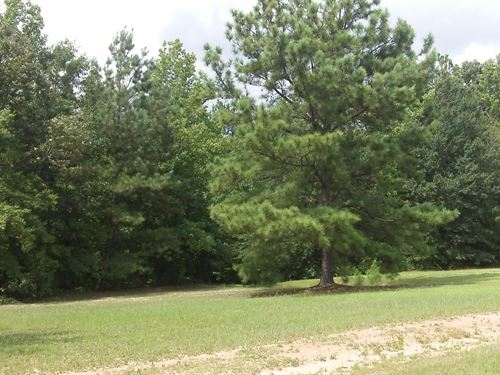 Tussahaw Farms, 7.02 Acre Lot : Locust Grove : Henry County : Georgia
