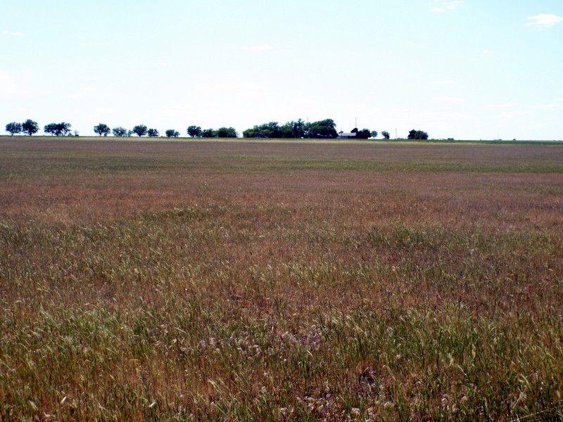 157 Acres- Cropland- Timber- Pond : Garber : Garfield County : Oklahoma