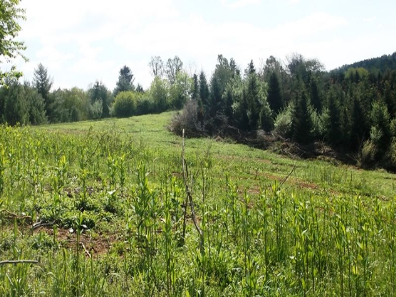 Blue Ridge Mountain Property : Fries : Grayson County : Virginia