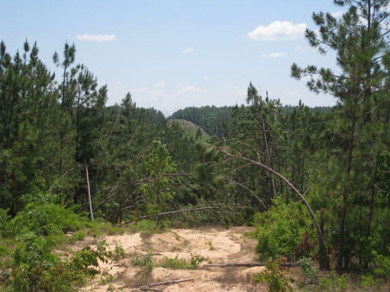 Lovely Hilltop 29+ Acre Homesite : Aiken : Aiken County : South Carolina