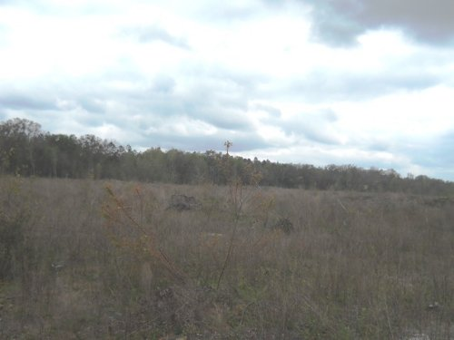 80 Acres With Paved Road Frontage : Live Oak : Suwannee County : Florida