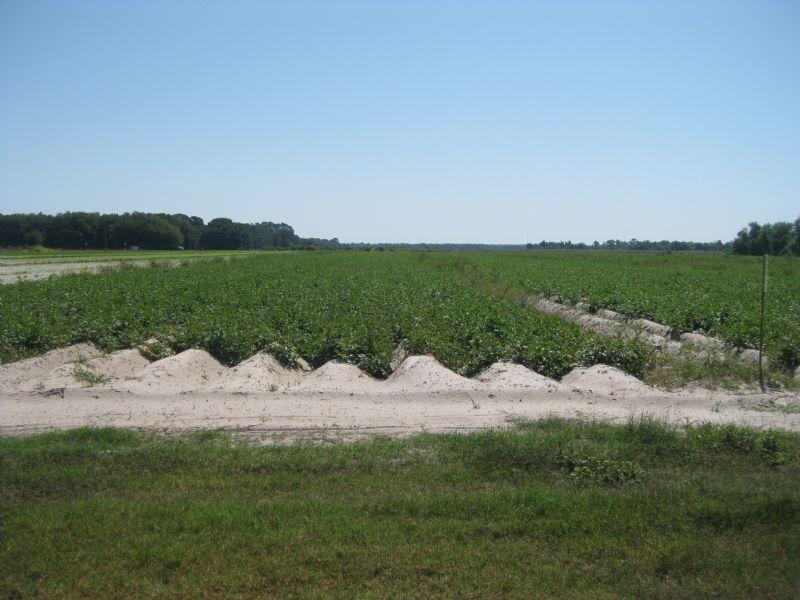 Wesnofske Farms : Crescent City : Putnam County : Florida
